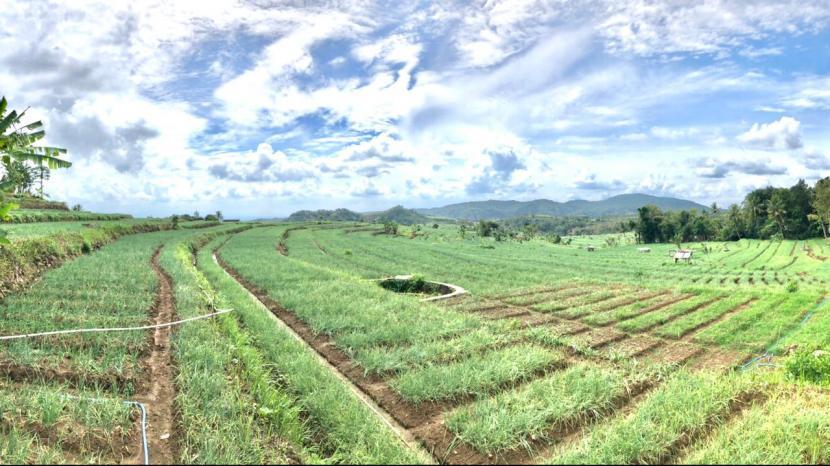 Dirjen Hortikultura Prihasto Setyanto mendorong sistem pertanian hortikultura yang ramah lingkungan, salah satunya dengan pengembangan bawang merah yang diberi nama Glowing.