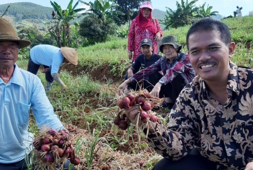 Dirjen Hortikultura Suwandi memanen bawang merah bersama petani di Bandung