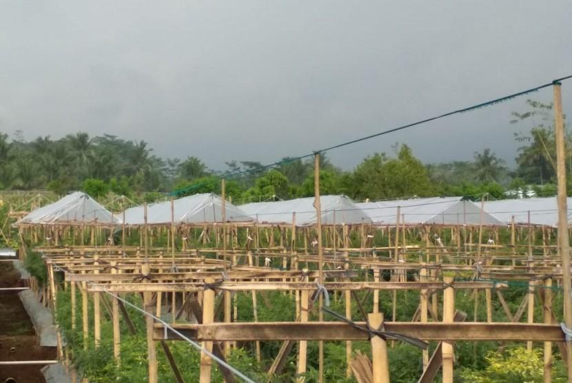 Ditjen Hortikultura telah mengembangkan model irigasi hemat air melalui teknologi sprinkle dan irigasi tetes (drip irrigation)