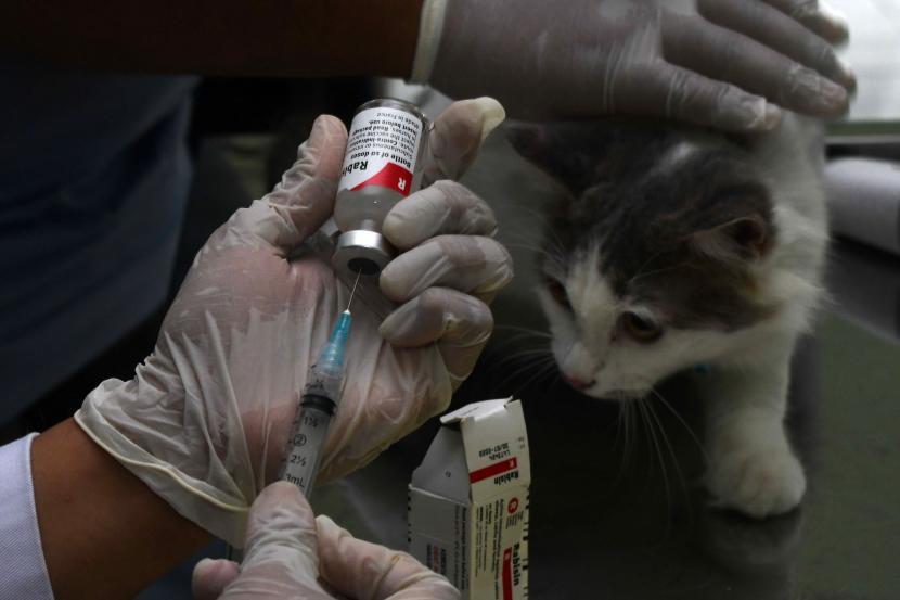 Dokter hewan menyiapkan vaksin rabies untuk disuntikkan pada kucing piaraan (Felis catus) saat bakti sosial vaksinasi rabies untuk kucing dan anjing di Dinas Ketahanan Pangan dan Pertanian Kota Madiun, Jawa Timur, Rabu (22/9/2021). Vaksinasi rabies yang dilakukan pada 250 ekor kucing dan 50 ekor anjing piaraan milik warga tersebut dimaksudkan untuk melindungi hewan piaraan dari rabies sekaligus memperingati Hari Rabies Sedunia.