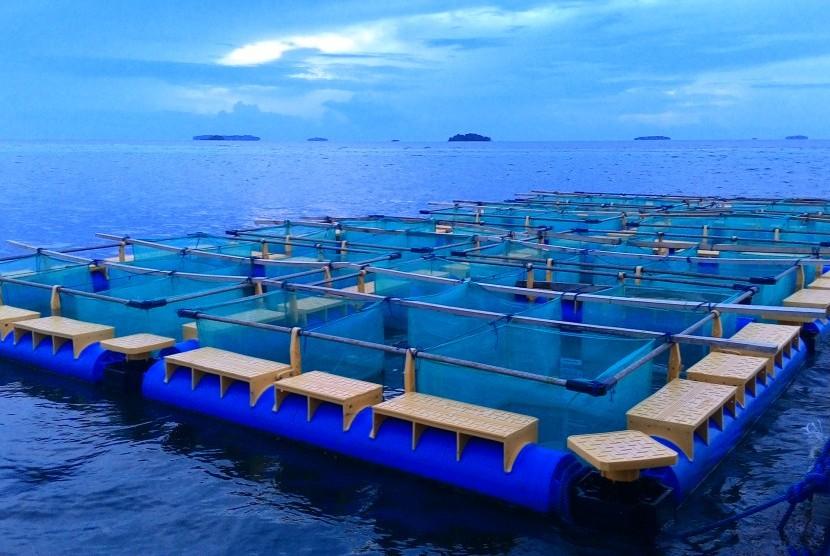 Jamur Laut