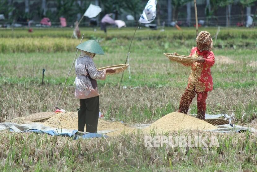 Dua buruh tani memisahkan gabah yang hampa usai panen padi di daerah Jalan Suekarno Hatta, Kota Bandung, Rabu (21/2).