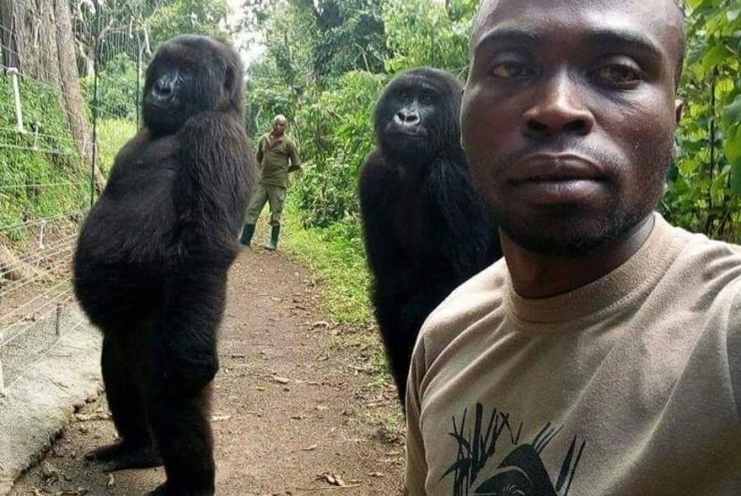 Dua gorila bernama Ndakaza dan Ndeze tampak ikut berpose dengan petugas di Taman Nasional Virunga, Republik Demokratik Kongo (DRC).
