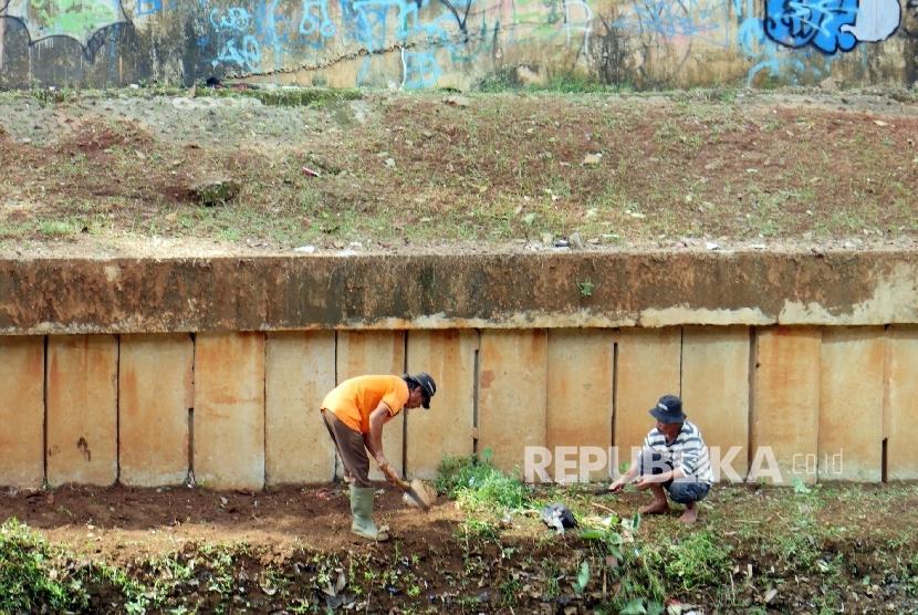 Dua petugas kebersihan tengah membabat tumput liar yang tumbuh di bantaran kali Ciliwung Jakarta, Ahad (15/5).  (Republika/ Darmawan)