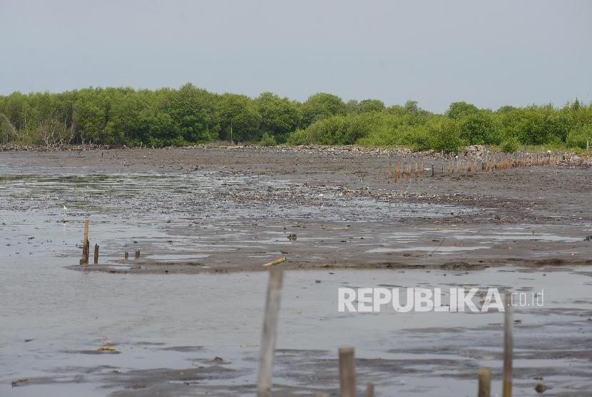 Ekosistem mangrove yang rusak akibat abrasi di perairan Serang, Banten, Rabu (27/4).Republika/Raisan Al Farisi