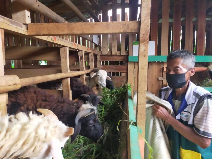 Fasilitator Desa BSI yang sekaligus merupakan Relawan Rumah Zakat, Elan Jaelani mengajak masyarakat untuk mengelola lahan tidur tersebut, dari sini lahirlah Markaz Domba yang disupport oleh BSI dan Rumah Zakat.