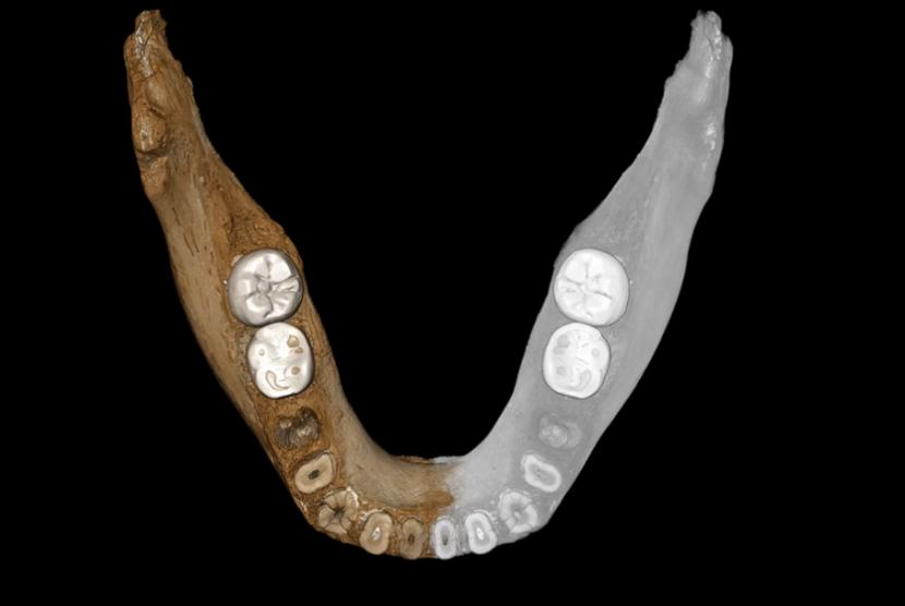Fosil Denisova.