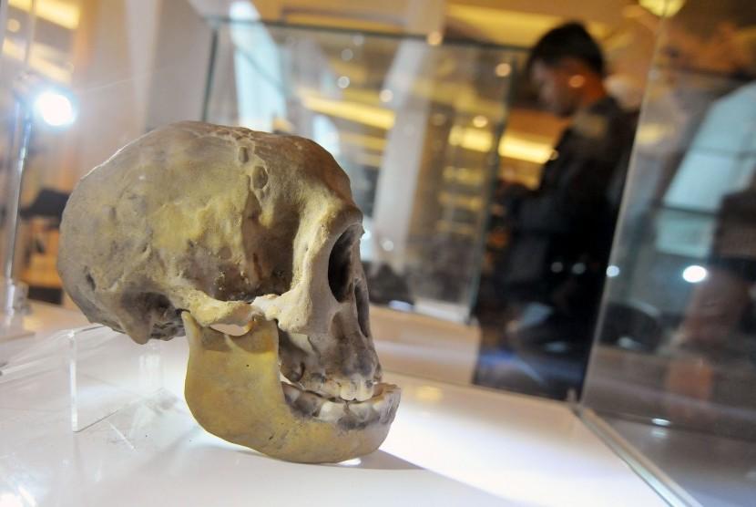 Pakar Sayangkan Fosil Manusia Purba Indonesia Belum Bisa Pulang Kampung Republika Online