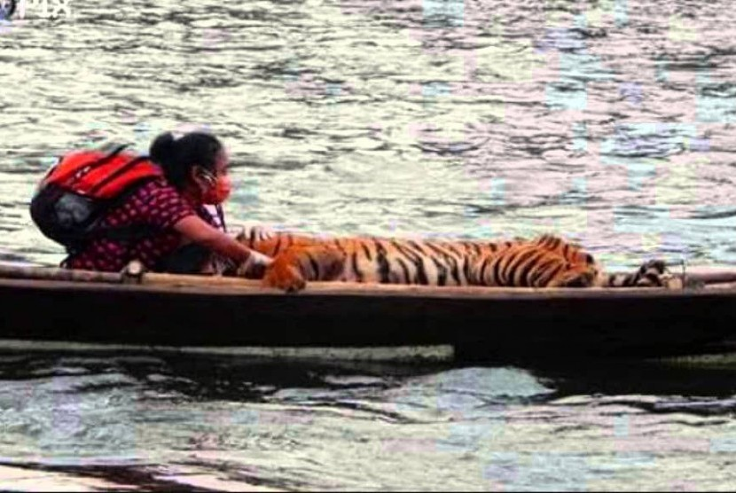 Foto dokter Erni Suyanti Musabine satu perahu dengan harimau yang beredar di media sosial