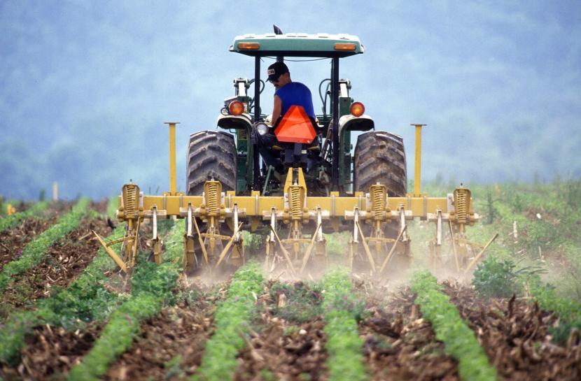 (Foto: ilustrasi pertanian)