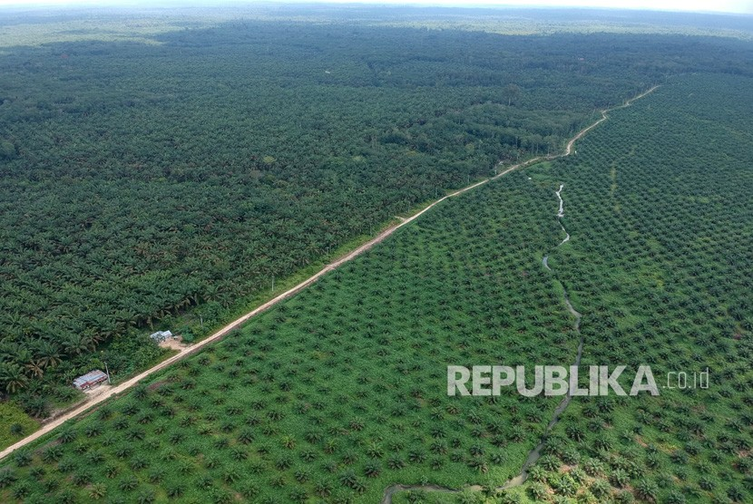 Foto udara kawasan perkebunan kelapa sawit di Batanghari, Jambi, Rabu (28/11).
