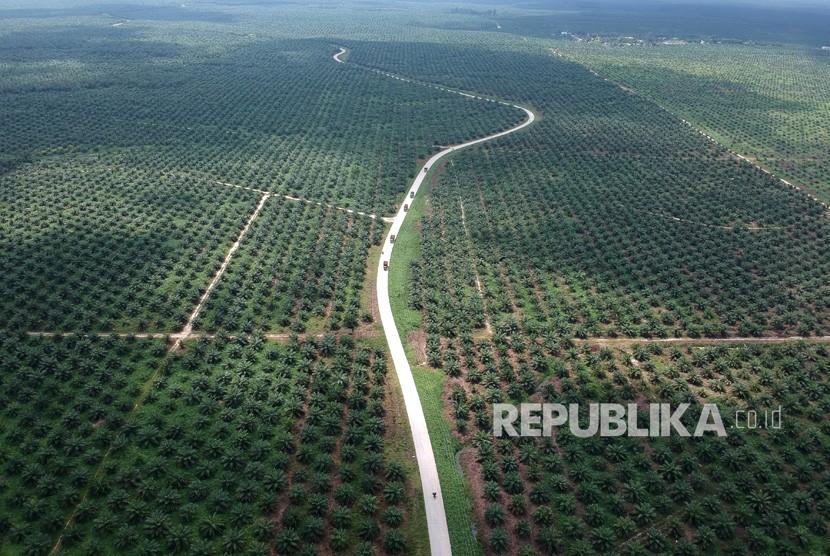 Aerial view of oil palm plantation in Batanghari, Jambi.