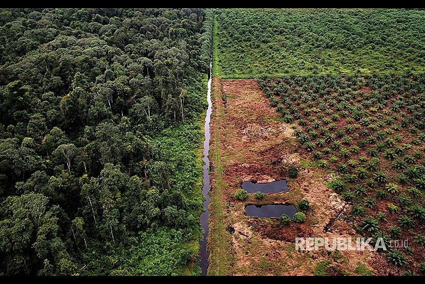 Foto udara menunjukkan hamparan pohon kelapa sawit di dalam kawasan konservasi Suaka Margasatwa Rawa Singkil Desa Lhok Raya, Kecamatan Trumon Tengah, Aceh Selatan, Aceh, Sabtu (3/3).