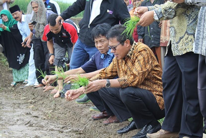 Gubernur Sumbar Irwan Prayiitno (berkacamata) melakukan penanaman padi di Solok