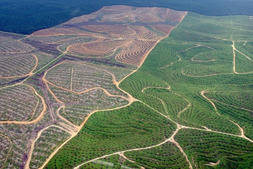 Hamparan perkebunan kelapa sawit membentuk pola terlihat dari udara di Provinsi Riau, Selasa (21/2).