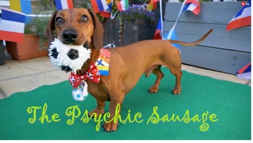 Hewan peramal bernama Psychic Sausage memprediksi hasil pertandingan antara Inggris vs Kroasia di Euro 2020.