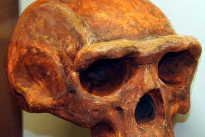 Peneliti Itb Temukan Usia Akurat Manusia Purba Homo Erectus Republika Online