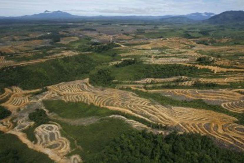 Hutan Kalimantan yang telah gundul karena penebangan liar.