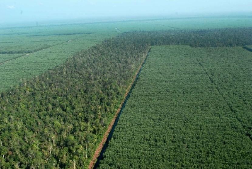 Hutan T