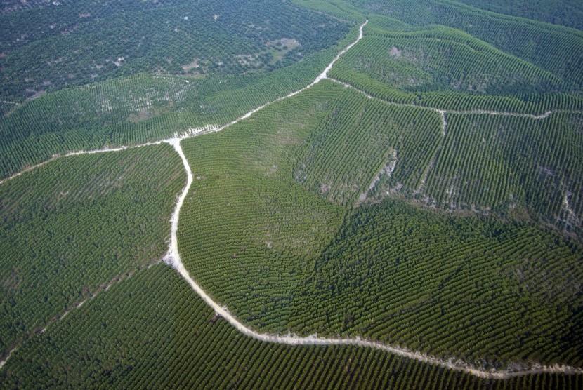 Hutan tanaman industri bahan baku pulp dan kertas terlihat dari udara di Provinsi Riau
