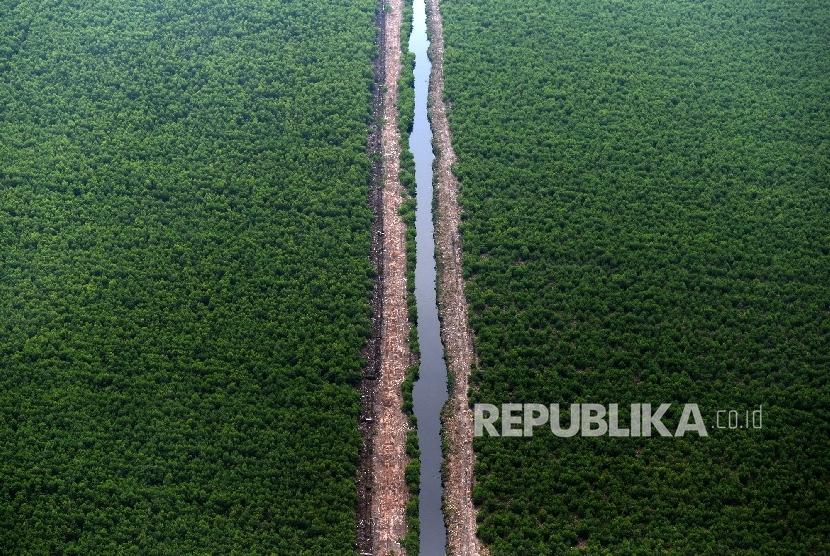 Hutan Tanaman Industri (Ilustrasi)
