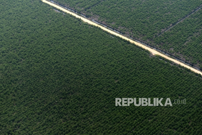 Hutan Tanaman Industri di Riau, Selasa (25/10).