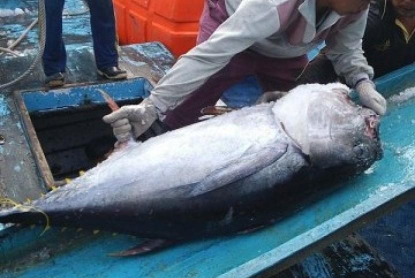 Ikan tuna, salah satu andalan ekspor hasil laut Indonesia.