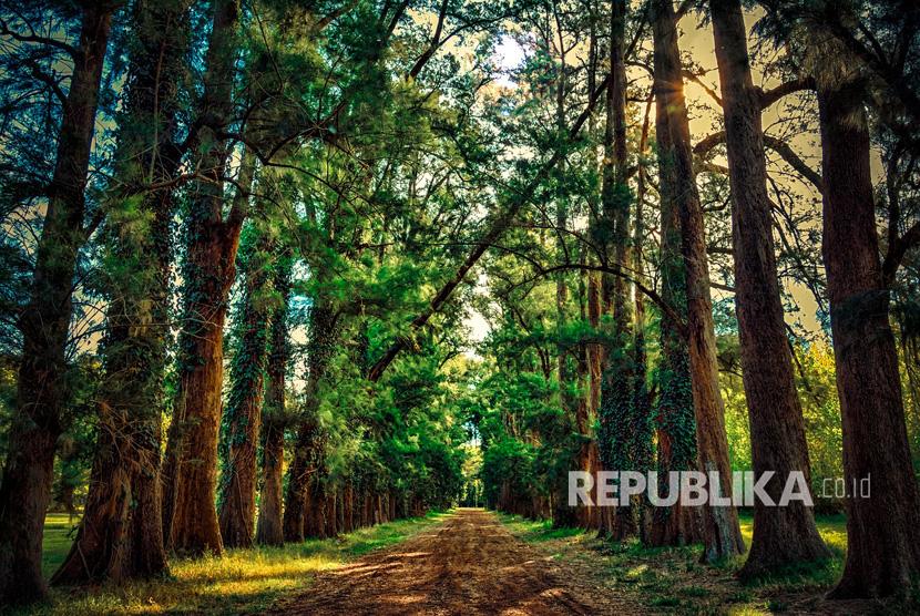 Ilustrasi Hutan