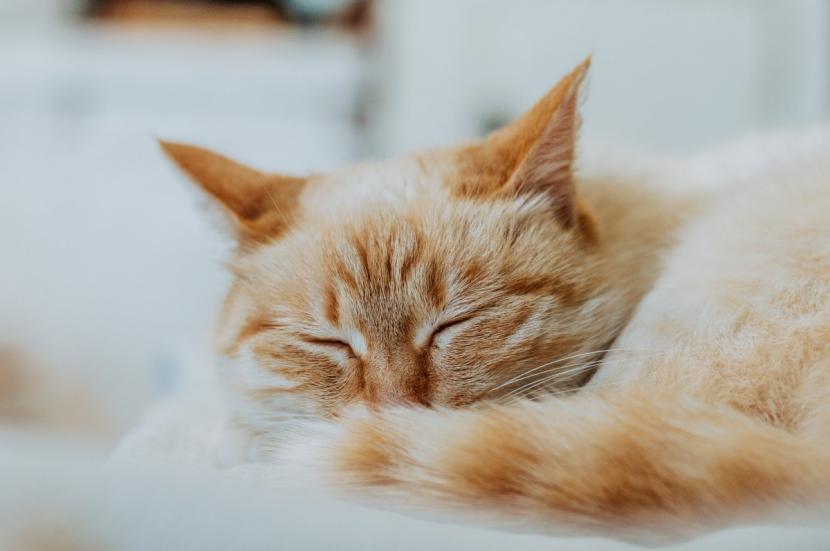Ilustrasi kucing tidur