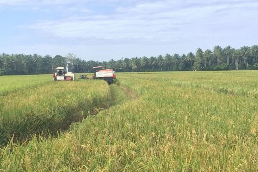 lustrasi lahan pertanian di belitung.