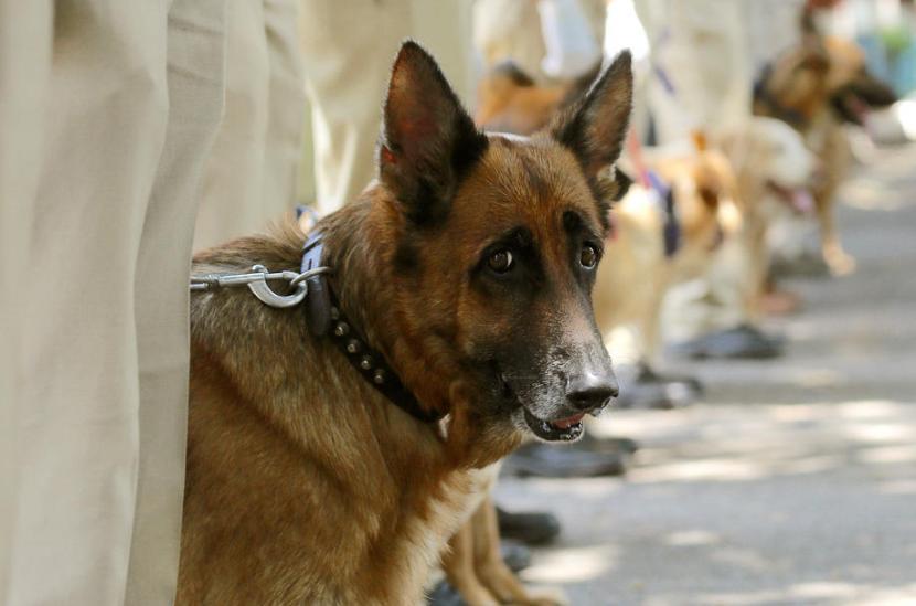 Anjing gonggong biasanya melihat apa yang tidak manusia lihat. Ilustrasi anjing