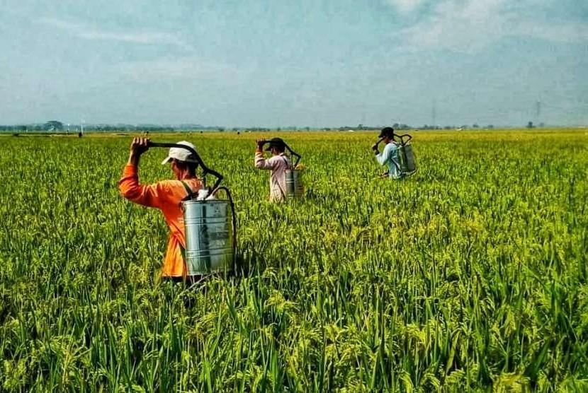 Ilustrasi penyemprotan untuk mengantisipasi organisme penganggu tumbuhan pada tanaman padi