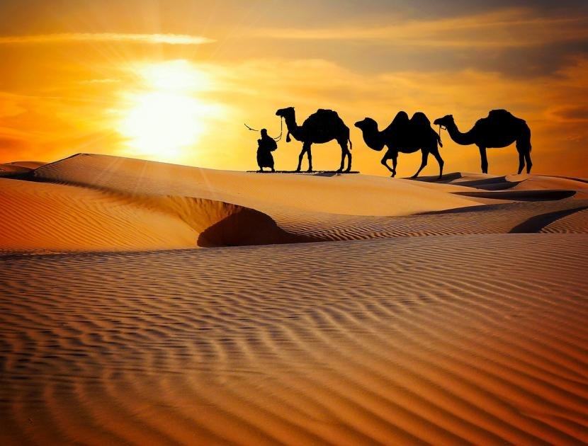 Saudara Tiri Cucu Nabi Muhammad, Hasan-Husain