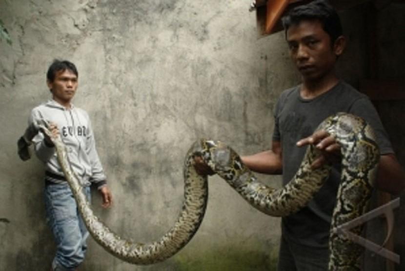 Rasulullah SAW berikan panduan bila ada ular masuk rumah. Ilustrasi ular