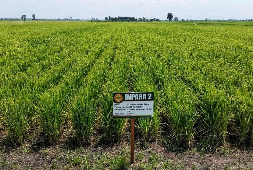 Ilutrasi lahan rawa menjadi lahan pertanian
