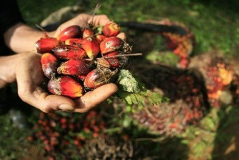 Minyak kelapa sawit (CPO).