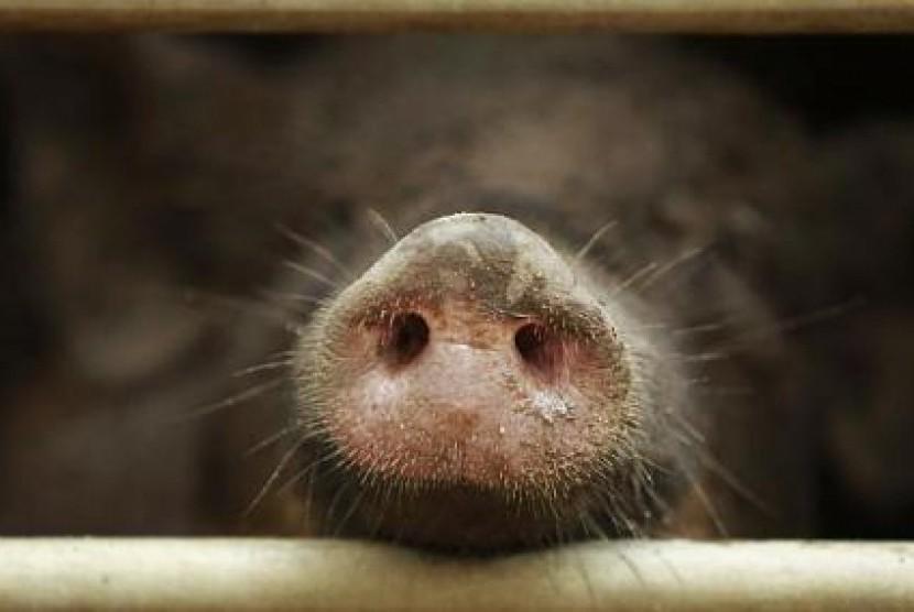 61+ Gambar Babi Liar Paling Hist