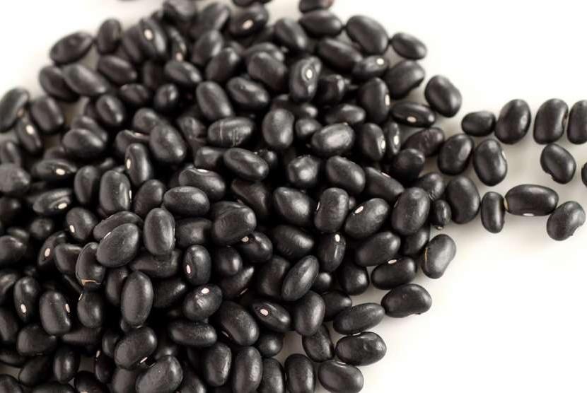 Kacang hitam