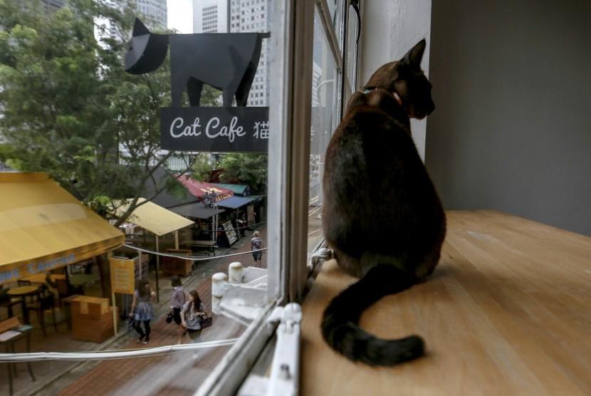 Gambar Kucing Rumahan godean.web.id