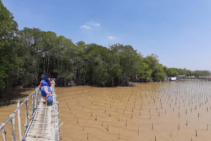 Kawasan hutan mangrove, yang ada di Kampung Tengkolak, Desa Sukakerta, Kecamatan Cilamaya Kulon, Karawang.