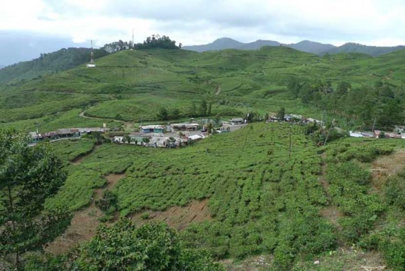 Kawasan Puncak, Bogor.