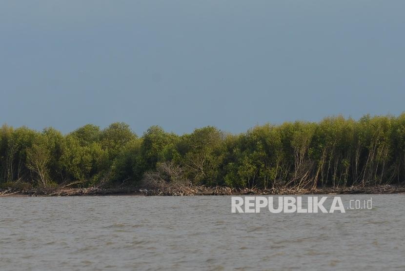 Kawasan wisata mangrove.