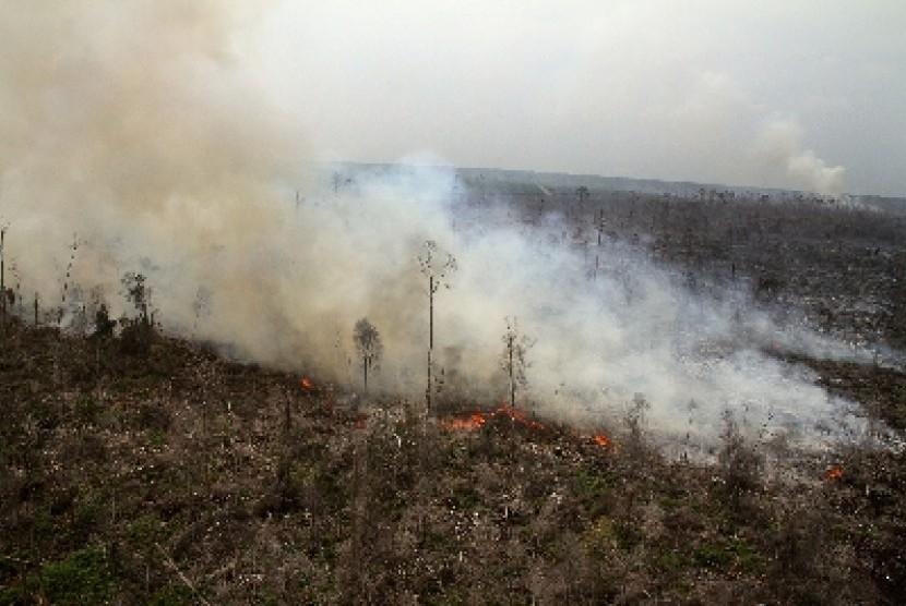 Kebakaran hutan dan lahan di Desa Buruk Bakul, Bengkalis, Riau, Jumat (13/2).