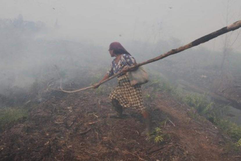Kebakaran hutan di Aceh Barat. (Ilustrasi)
