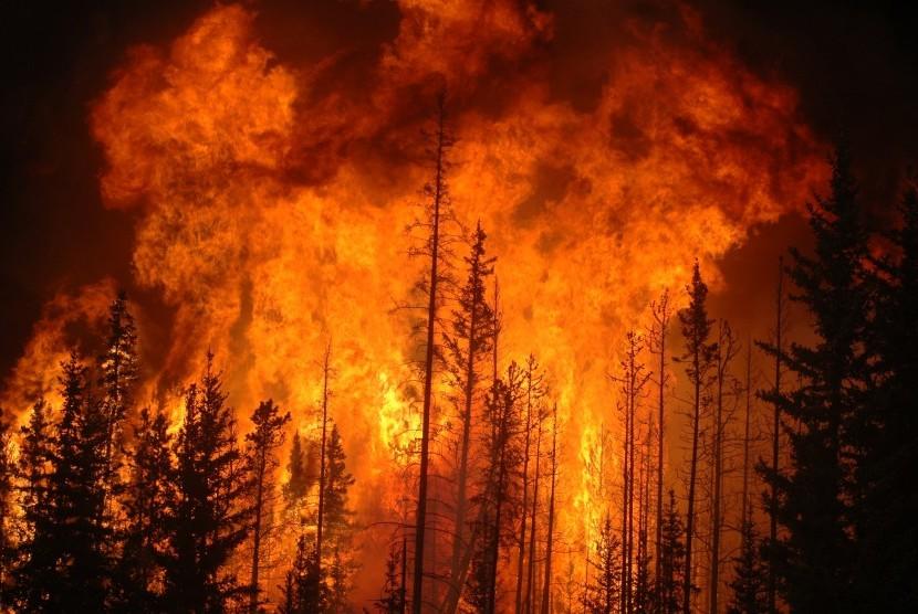 Resultado de imagen de incendio en el bosque animales huyen