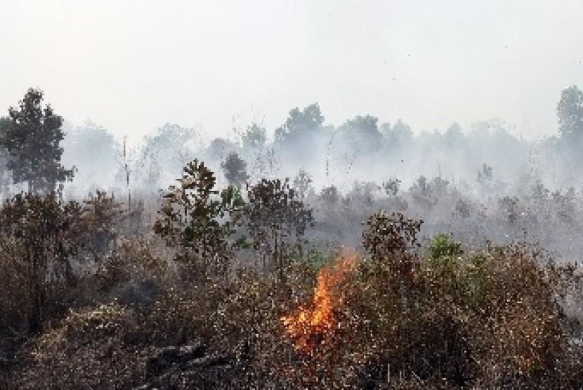 Kebakaran lahan gambut di Riau