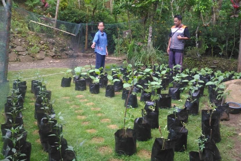 Kebun gizi keluarga di RW 6 Dusun Makemdowo, Desa Sidomulyo, Kecamatan Purworejo, Kabupaten Purworejo.