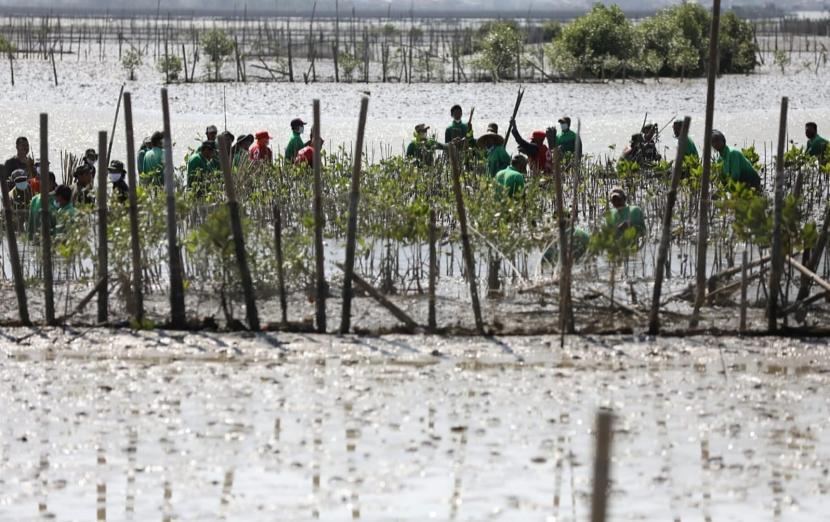 Kegiatan penanaman mangrove program