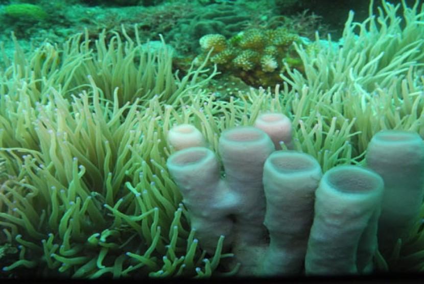 Keindahan bawah laut di Taman Wisata Alam Batuangus, Sulawesi Utara
