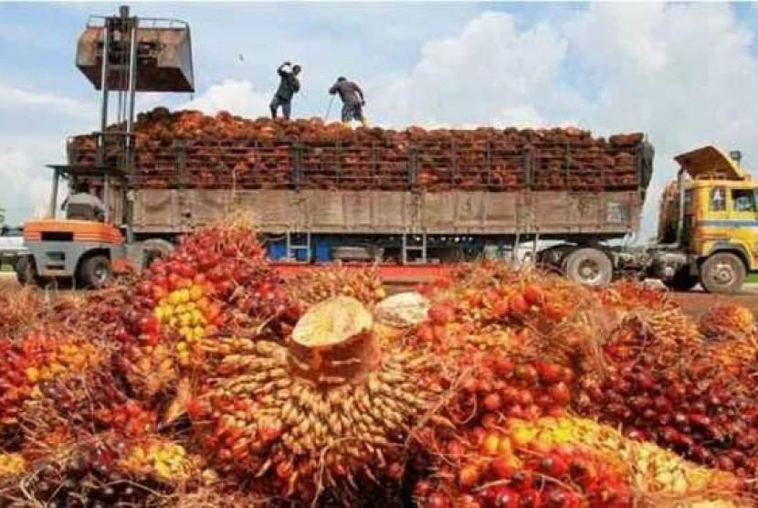 Kelapa sawit yang akan diolah menjadi minyak goreng dan diekspor ke berbagai negara